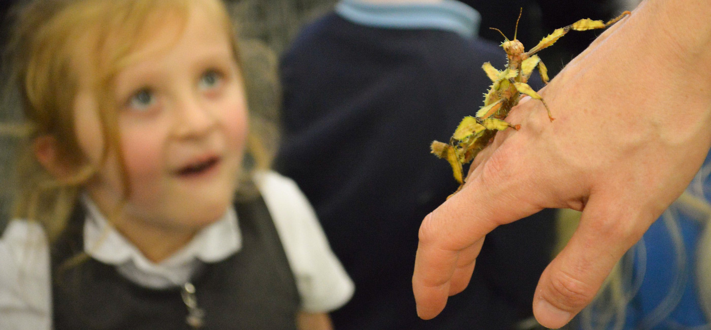 Girl and bug at Jess French schools event, Norwich Science Festival 2019