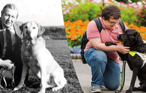 A photo montage of service users and their guide dogs as part of the Guide Dogs at 90 campaign